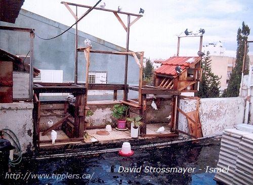 19-david-strossmayer