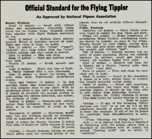A-Standard-for-the-Flying-Tippler-2-05