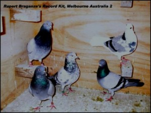 Australian-old-Bird-Record-by-Rupert-Braganza-01
